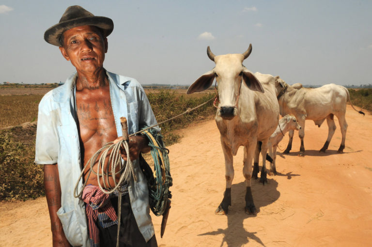A farmer leads his cows to the pastures. Photo by Tom van der Leij.