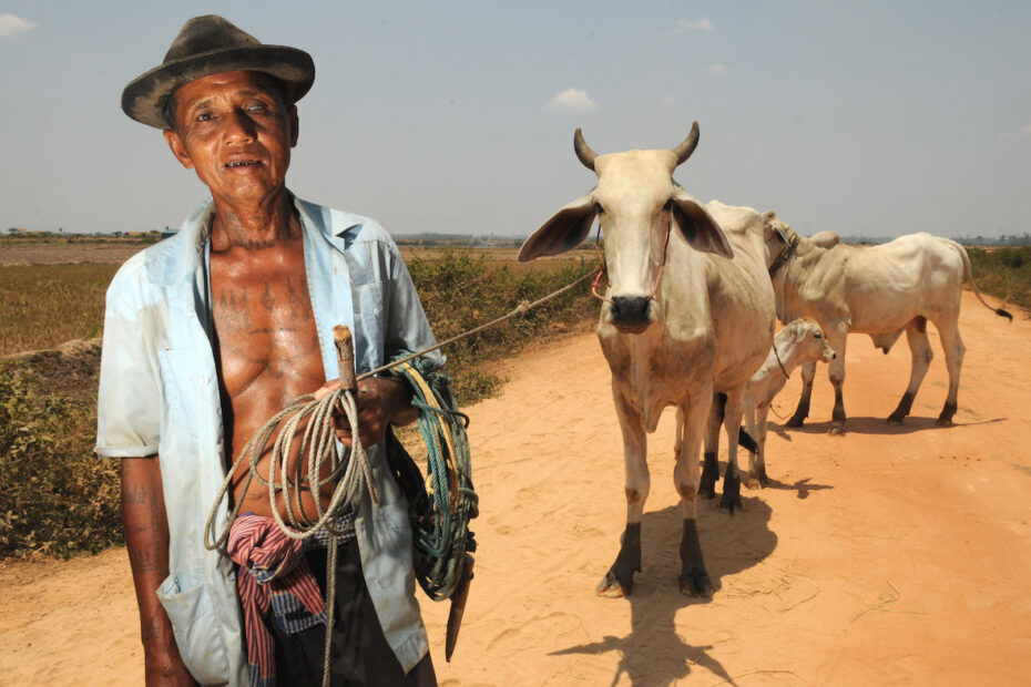 Man with cows by Amsterdam photographer Tom van der Leij