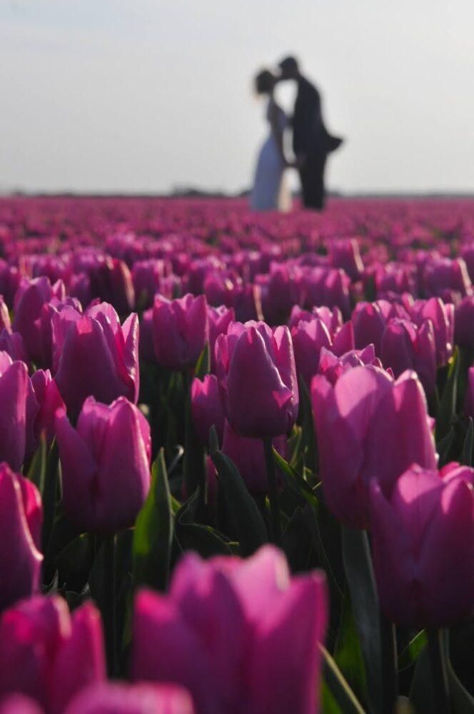Kissing in the Dutch tulip fields by Amsterdam photographer Tom van der Leij