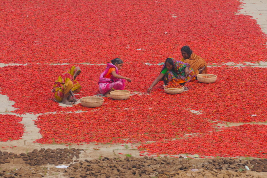 Women in Bangladesh sorting red peppers